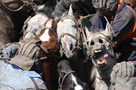 Najeeb Mirza on Tajikistan, Goat Carcasses, and Moderniziation