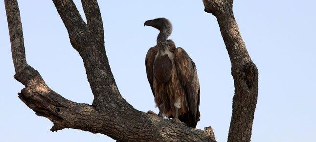 Ruffled Feathers in Sudan