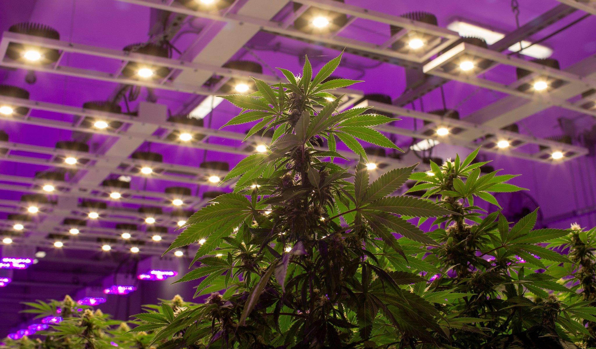 Canada's cannabis conundrum